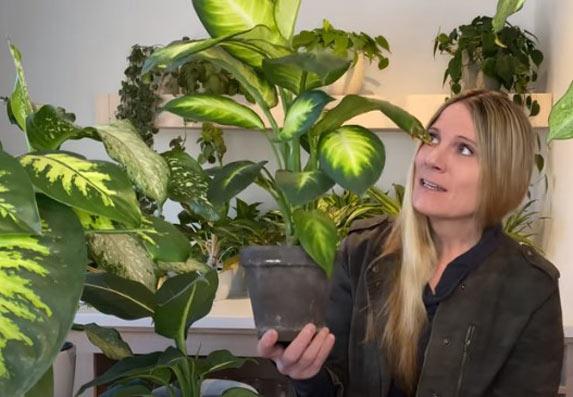 Koje to otrovno cveće držimo u kući?