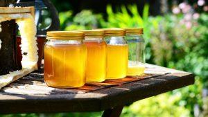 Koliki je značaj meda u ishrani?