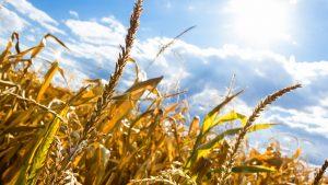 Koliko će da poraste temperatura u Srbiji zbog klimatskih promena?