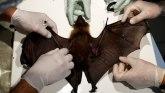Korona virus i divlje životinje: Raste strah od bolesti koje se prenose sa životinje na čoveka