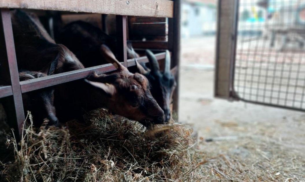 Kozarstvo isplativa grana stočarstva