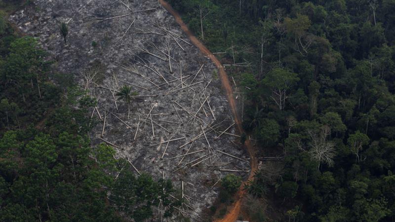 Krčenje Amazonske prašume u Brazilu na najvišem nivou od 2008.
