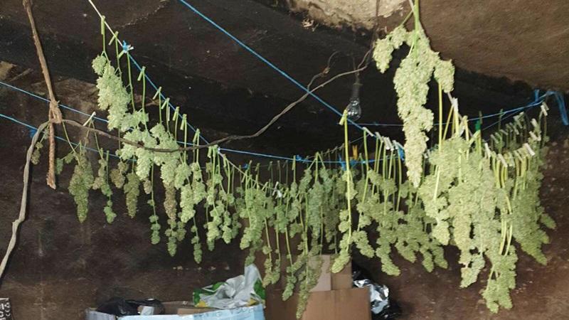 Krio 5,6 kilograma marihuane na tavanu