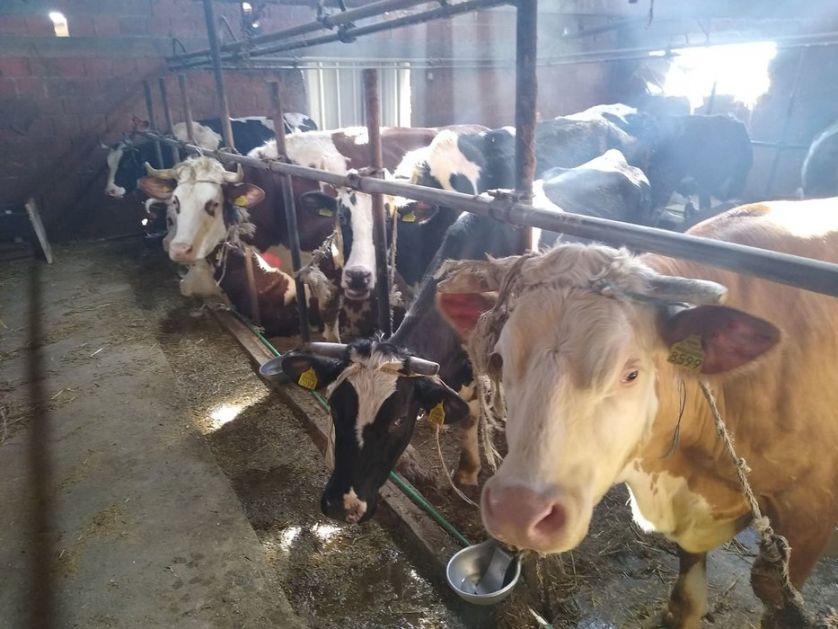 U posao oživljavanja stočarstva uključiti i dijasporu