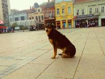 Kućice za pse na javnom prostoru: Dobro delo ili kršenje zakona