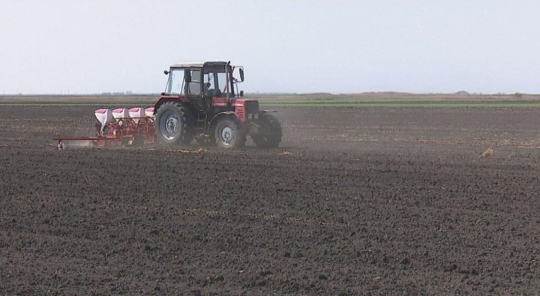 Kukuruz sejati kada je temperatura zemljišta 10 do 12 stepen