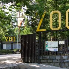 Lavica napala devojčicu u Zoo vrtu! Šapom joj odrala kožu sa glave, dete u TEŠKOM STANJU (FOTO)