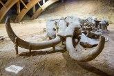 Ledeno doba u Hrvatskoj: Mamuti se pojavljuju FOTO