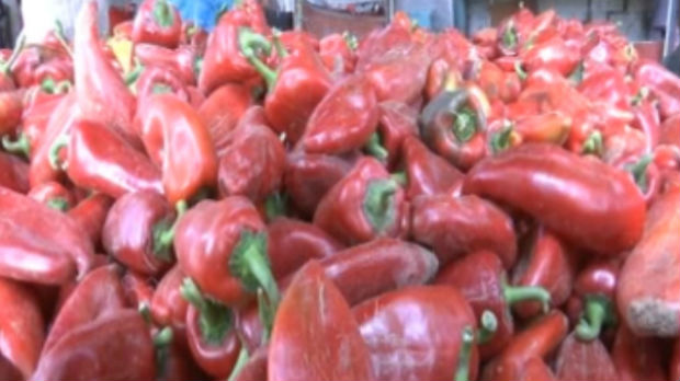 Lepo vreme produžilo berbu paprike