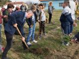 Leskovački đaci i nastavnici zasadili 140 sadnica bora i smrče