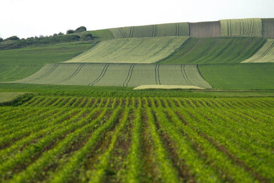 Licitacija poljoprivrednog zemljišta u Zrenjaninu počinje u ponedeljak