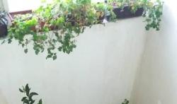 Lisica ušetala do četvrtog sprata zgrade u mestu kraj Niša