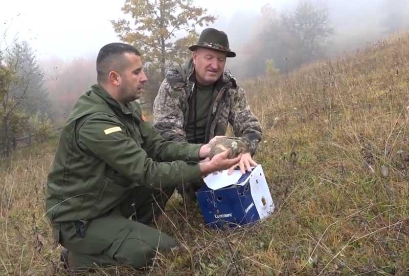 """Lovačko udruženje """"Hajla"""" uspješno izvelo akciju puštanja fazana u lovištu Besnik"""