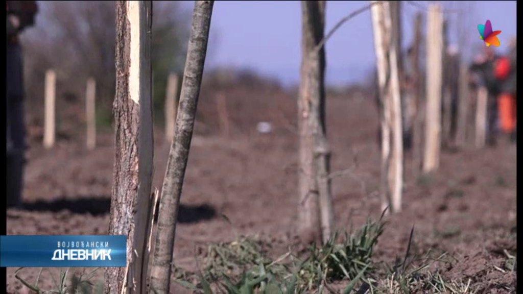Lovci iz Belegiša počeli pošumljavanje atarskog dela puta do Petrović salaša