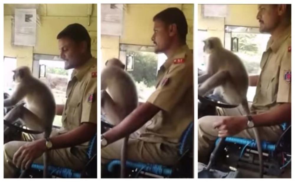 MAJMUN ZA VOLANOM ODUŠEVIO INDIJCE: Putnici u autobusu  se nisu bunili, ali je pravi vozač ipak kažnjen (VIDEO)