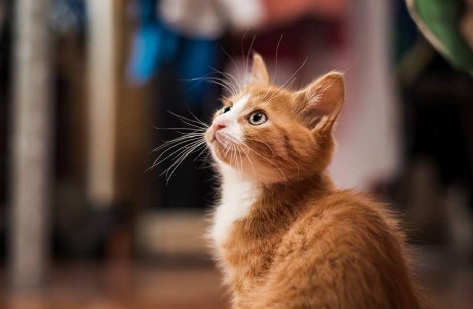 Mačka za minut napravila 26 trikova i ušla u Ginisovu knjigu rekorda!
