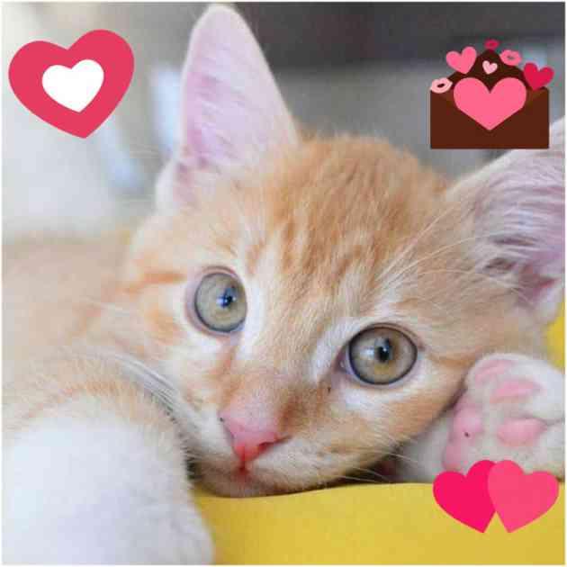 Mačke: U susret Danu zaljubljenih, analiziranje značenje ljubavnih ugriza!