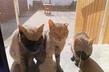 Mačke (sve je pošlo naopačke) 2.