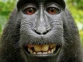 Majmunska posla: Zbog ovog selfija su godinama na sudu