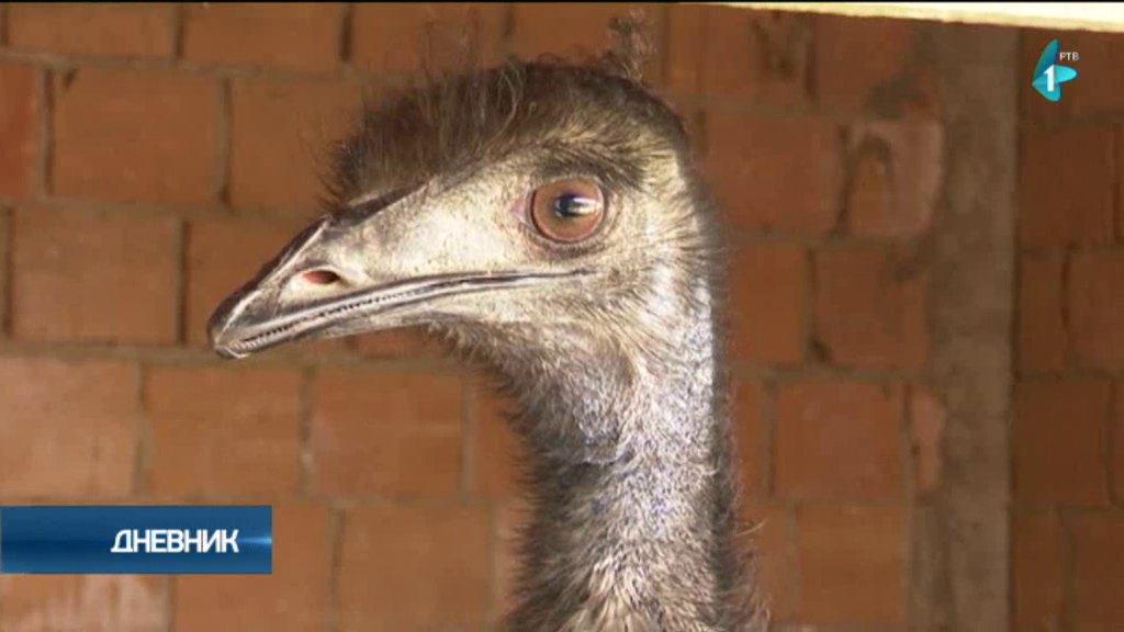 Mala farma emua jedne Zrenjaninke