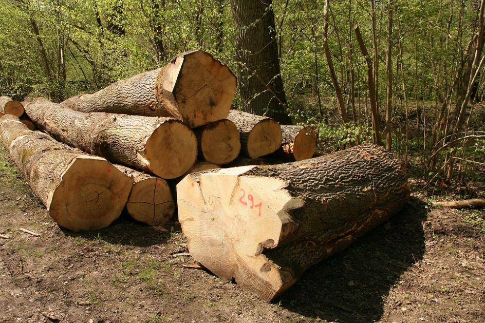 Manja proizvodnja šumskih sortimenata u Srpskoj ali je prodaja povećana