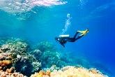 Mediteran postaje tropsko more - koralni grebeni se smanjuju, meduze se množe