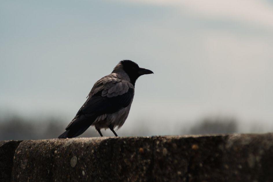 Međunarodni dan zaštite biodiverziteta - Kako zaštiti gnezda ptica