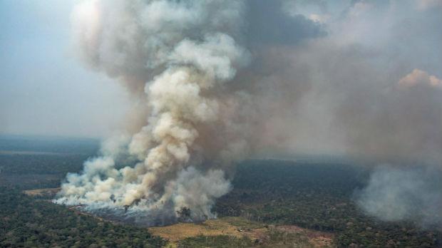 Merkel: Razgovaraćemo s Brazilom o pošumljavanju Amazonije