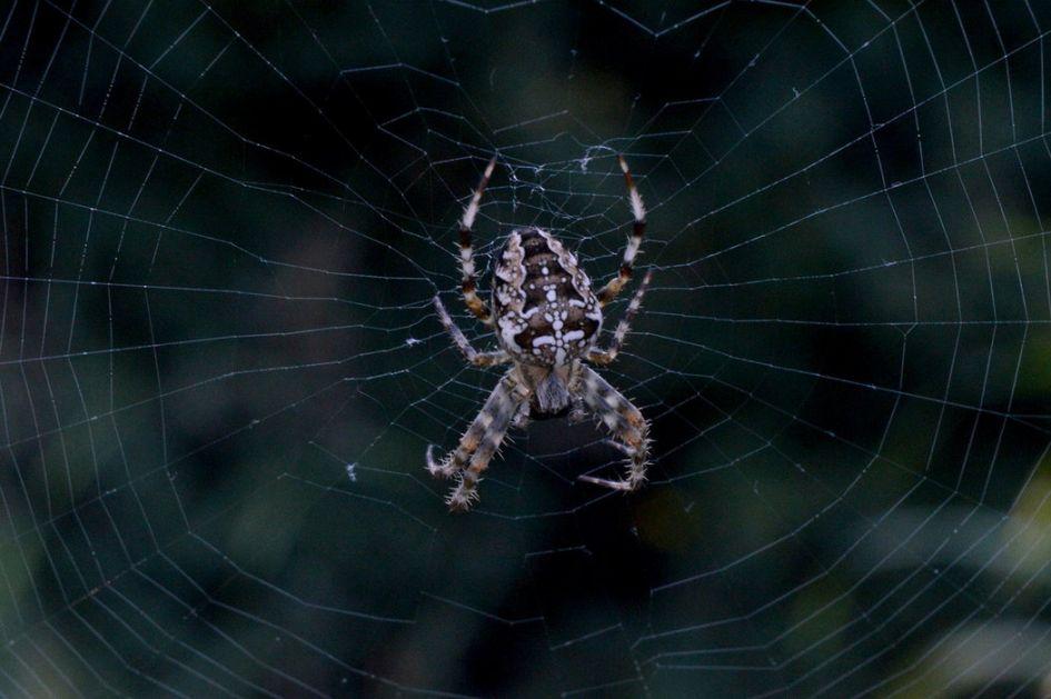 Mičigen: Biblioteka zatvorena zbog otrovnih paukova