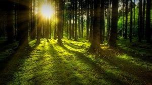Milijarda hektara šume mogla bi da uspori globalno zagrevanje