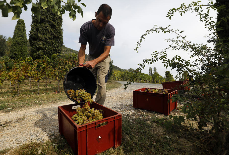 Milion i po poljoprivrednih radnika u Italiji diže glas protiv izrabljivanja