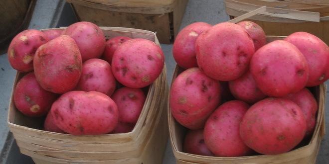 Ministarstvo posreduje u prodaji zaliha domaćeg krompira