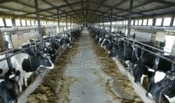 Mlekari u Srbiji traže da otkupljivači podignu cenu mleka