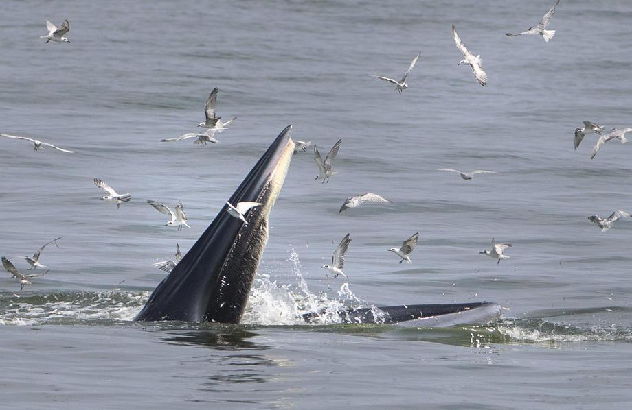 More izbacilo telo mrtvog kita na obalu kod Eseksa