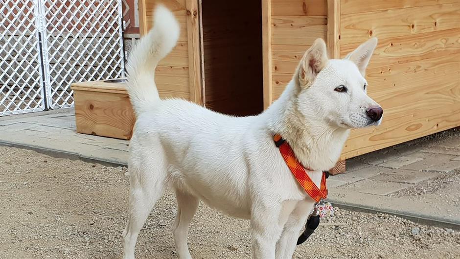 Mun Džae In na poklon od Pjongjanga dobio dva psa