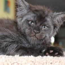 NAJJEZIVIJA NA SVETU: Mačka sa LJUDSKIM LIKOM - Mnogi veruju da je u njoj zarobljena duša grešnika!