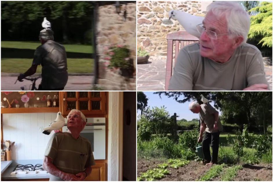 NERAZDVOJNI PRIJATELJI Penzioner je spasio goluba iz kandži mačke, od tada ga više ni na trenutak ne napušta VIDEO