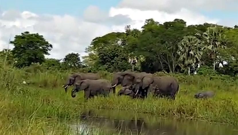slonovi seks videa dijamant kitty analni pornić