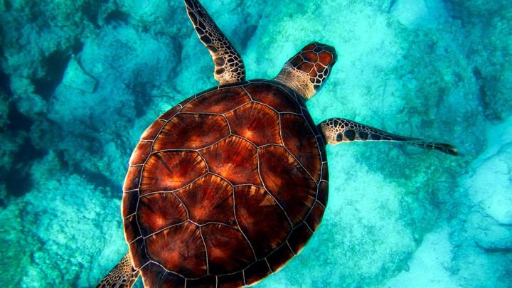 NEVEROVATNO OTKRIĆE: Na Solomonskim ostrvima pronađena SVETLEĆA KORNJAČA (FOTO)