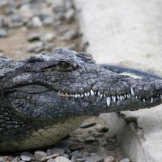 NEVEROVATNO! OVA GODINA DONOSI SAMO IZNENAĐENJA: Čovek našao krokodila na svojoj barci (FOTO)