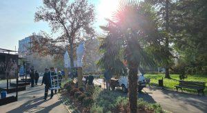 Na Kalemegdanu počela zaštita palmi za zimu (VIDEO)