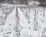 Na Svetog Stefana vinogradari traže bolju protivgradnu zaštitu