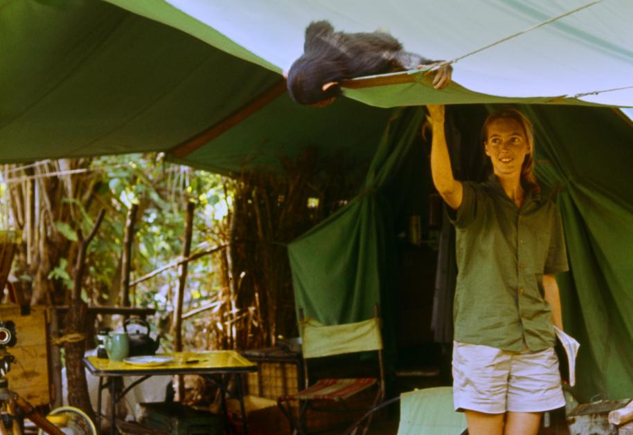 Nagrađivani dokumentarac o naučnici Džejn Gudal u KCB