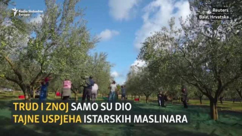 Najbolje maslinovo ulje na svijetu dolazi iz Istre