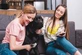 Najduže čekaju na dom: Danas je dan crnih pasa