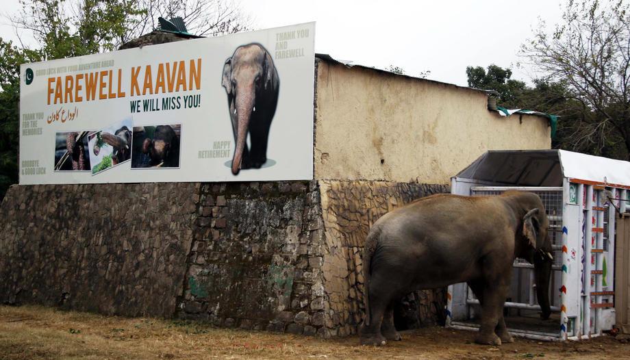 Najusamljenijeg slona na svetu čeka bolji život