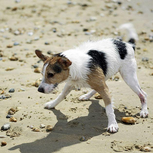 Najviše tužbi zbog ujeda pasa