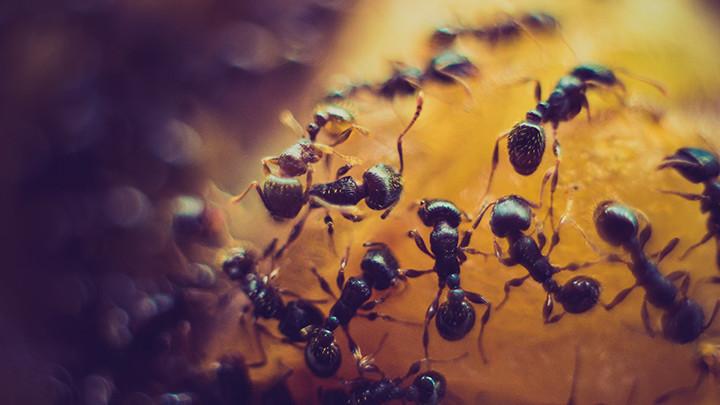 Napravite sami domaći sprej koji će uništiti sve mrave u kući! Potrebno je 5 sastojka!