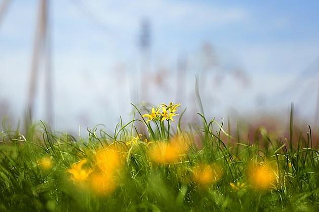 Narednih dana sunčano i toplo, sutra mogući kratkortrajni pljuskovi
