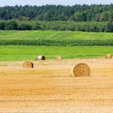 Naša najveća žitnica preti da postane agrarna pustinja: Evo šta savetuju stručnjaci da se takav scenario spreči